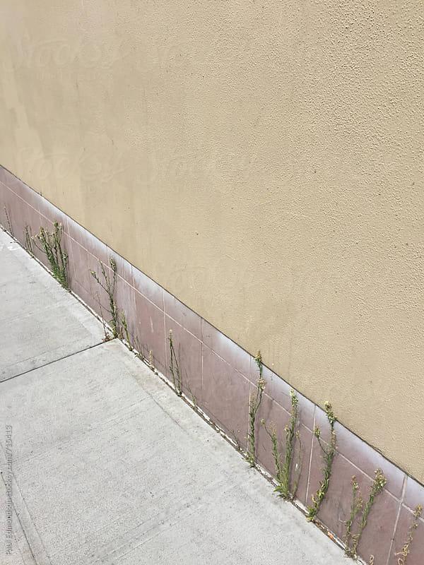 Weeds growing along urban sidewalk by Paul Edmondson for Stocksy United
