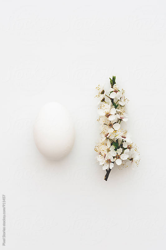 White egg and blossoms on white by Pixel Stories for Stocksy United