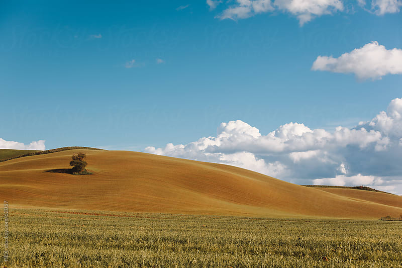 Tuscany Autumn Country. Italy by HEX. for Stocksy United