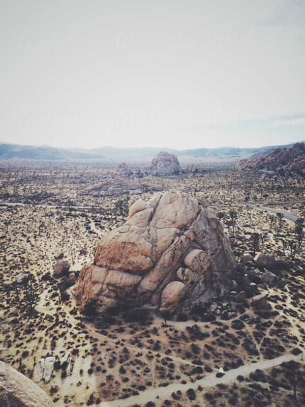 Joshua Tree by Sean Horton for Stocksy United