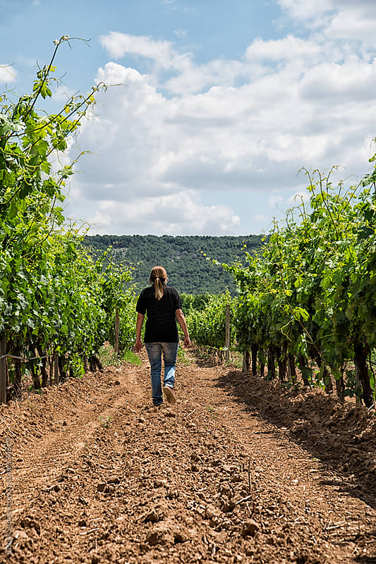 An enologist inspects a vineyard in Ribera del Duero by Bisual Studio for Stocksy United