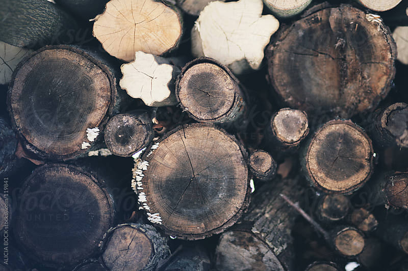 Winter Wood Pile by ALICIA BOCK for Stocksy United