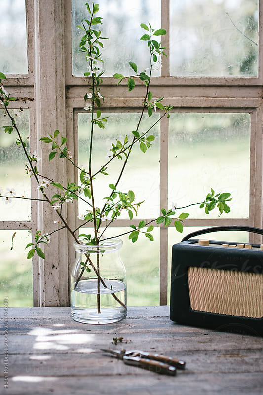 Blossom in a vase and a radio in front of a window by Helen Rushbrook for Stocksy United