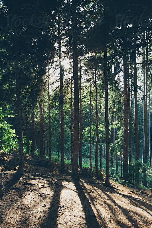 Sunny clearing in woodland by Amir Kaljikovic for Stocksy United