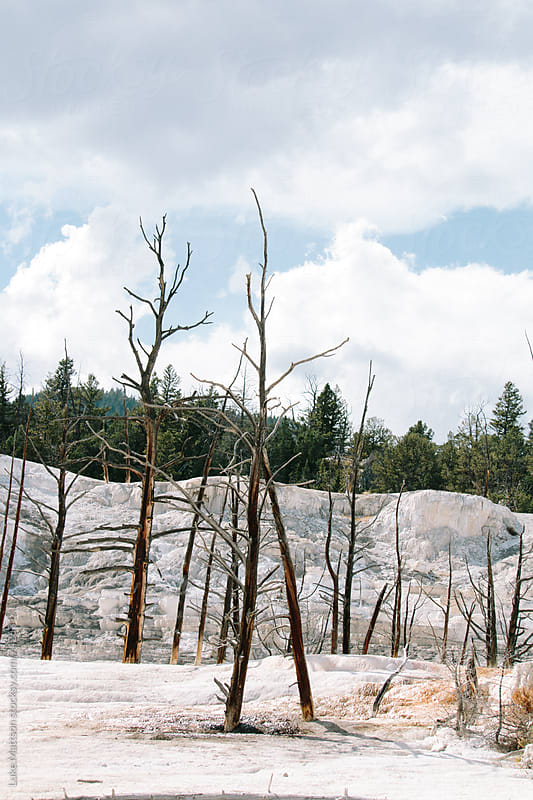 Dead Trees Amidst Crystallized Calcium Carbonate At Mammoth Hot Springs by Luke Mattson for Stocksy United