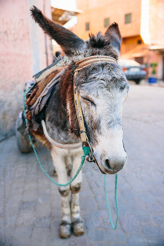 Donkey with carriage in Morocco streets by Alejandro Moreno de Carlos for Stocksy United