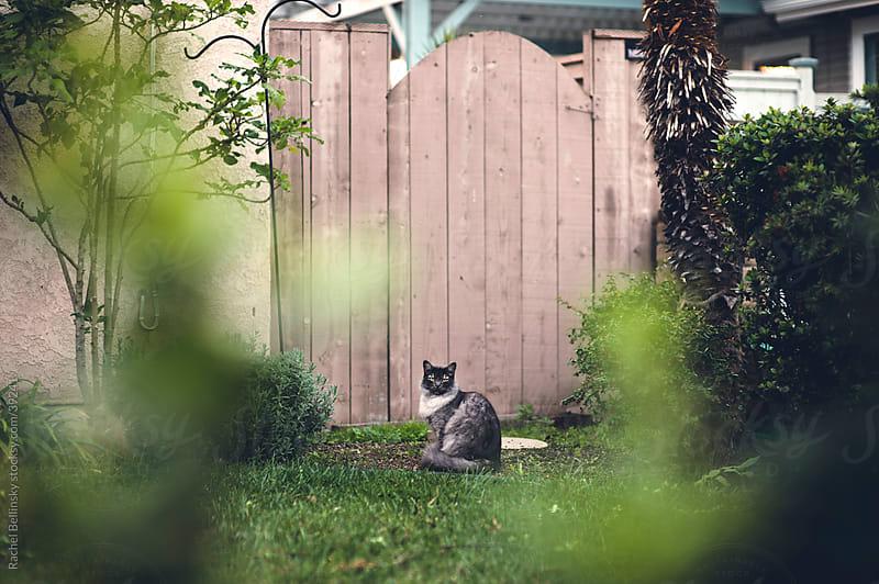 Grey cat in front of a fence in a grassy yard by Rachel Bellinsky for Stocksy United
