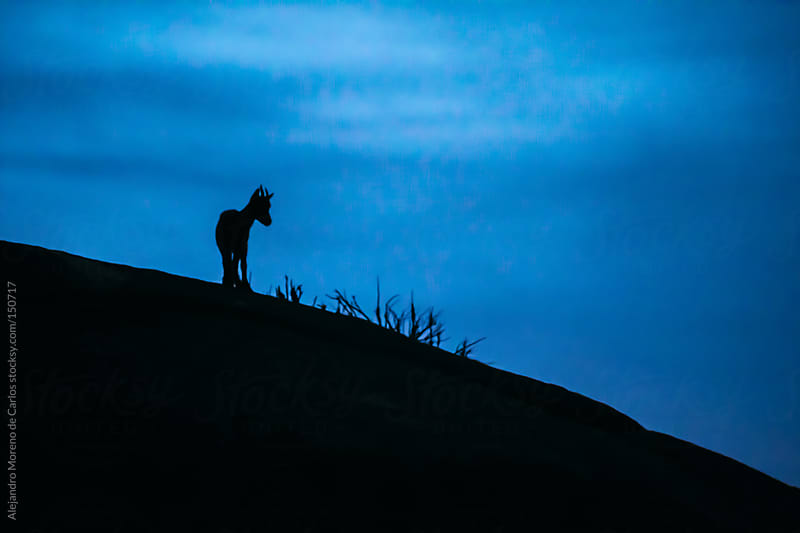 Young Spanish wild goat (capra pyrenaica) silhouette on top of rocks at sunset by Alejandro Moreno de Carlos for Stocksy United