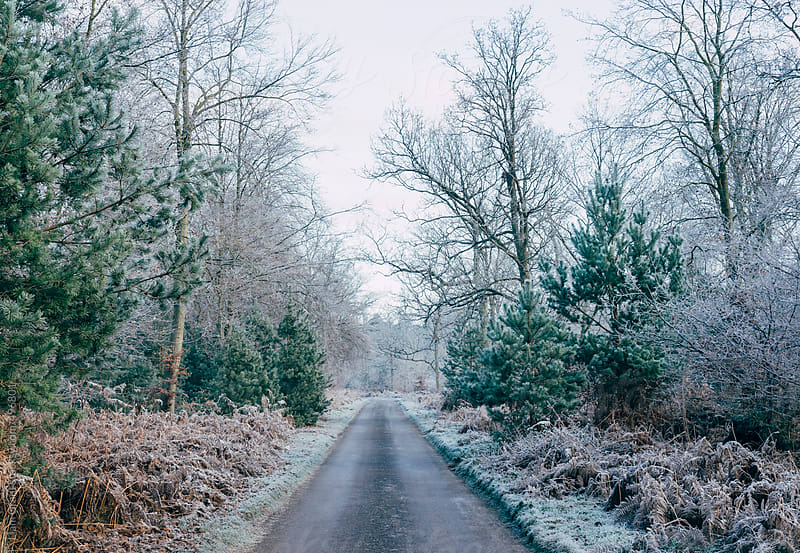 Icy remote country road lined with trees.  by Liam Grant for Stocksy United