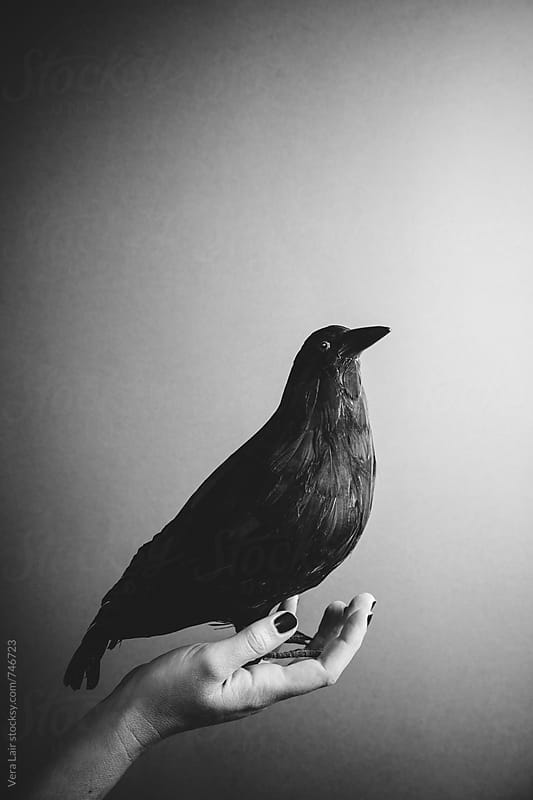 False raven posed on a female hand by Vera Lair for Stocksy United
