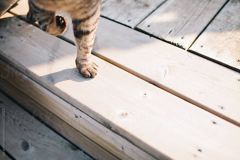 A cat's paw standing on one foot on a deck. by Sarah Lalone for Stocksy United