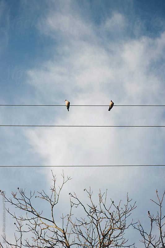 Bird love by Jovana Rikalo for Stocksy United