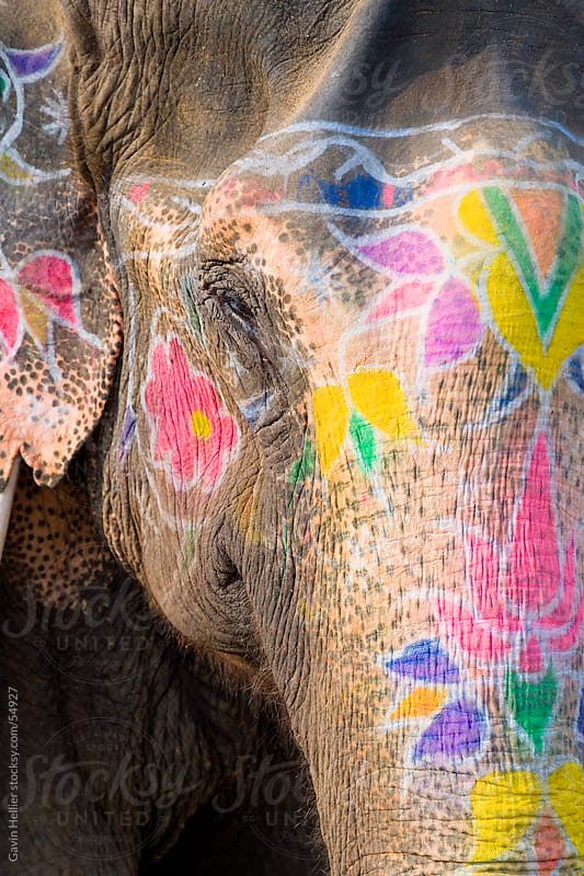 Ceremonial Painted elephant, Amber Fort Palace, Jaipur, Rajasthan, India, South Asia by Gavin Hellier for Stocksy United