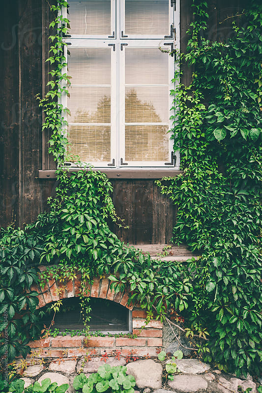 Old house covered in greenery. by Marija Savic for Stocksy United