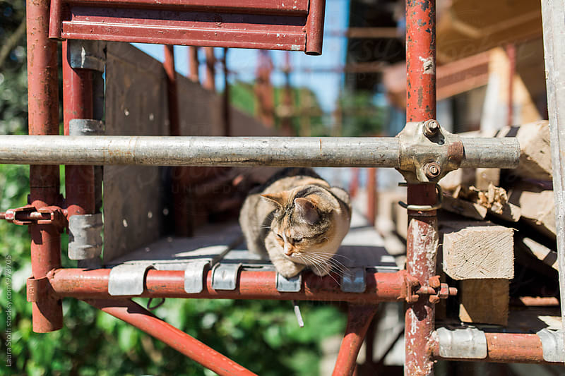 Tabby cat exploring building site on scaffolding by Laura Stolfi for Stocksy United