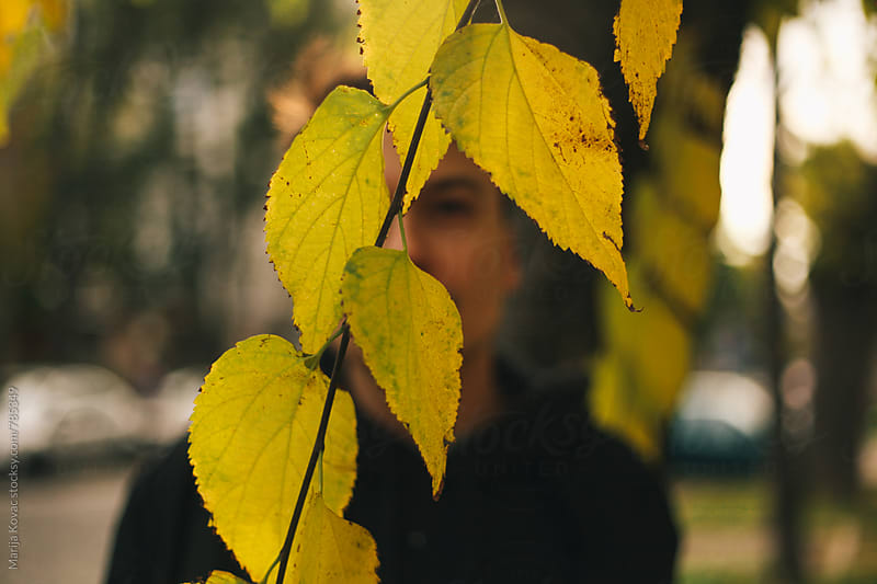Yellow leaves -horizontal by Marija Kovac for Stocksy United