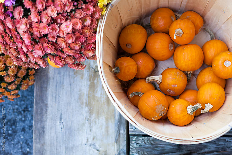 A basket holds baby pumpkins for sale outside the entrance to a country store.  by Holly Clark for Stocksy United