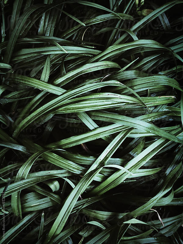 Green plant leaves in closeup by James Ross for Stocksy United
