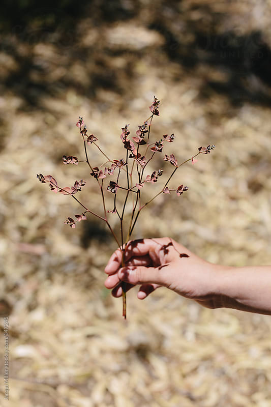 Girl holding a couple of twigs in the bush by Jacqui Miller for Stocksy United