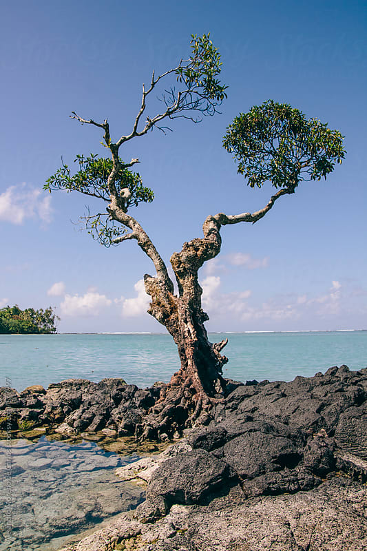 Lonely tree growing on volcanic rocks next to blue sea by Alejandro Moreno de Carlos for Stocksy United