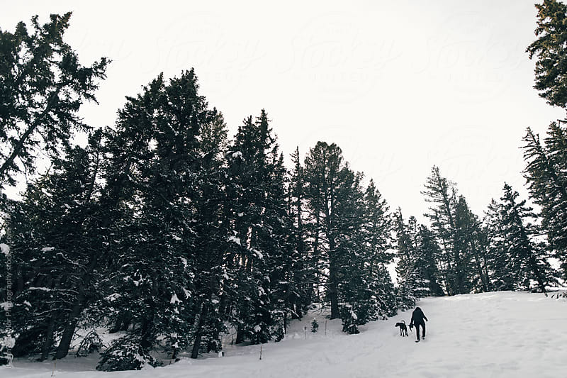 Person with dog hiking in winter by Isaiah & Taylor Photography for Stocksy United