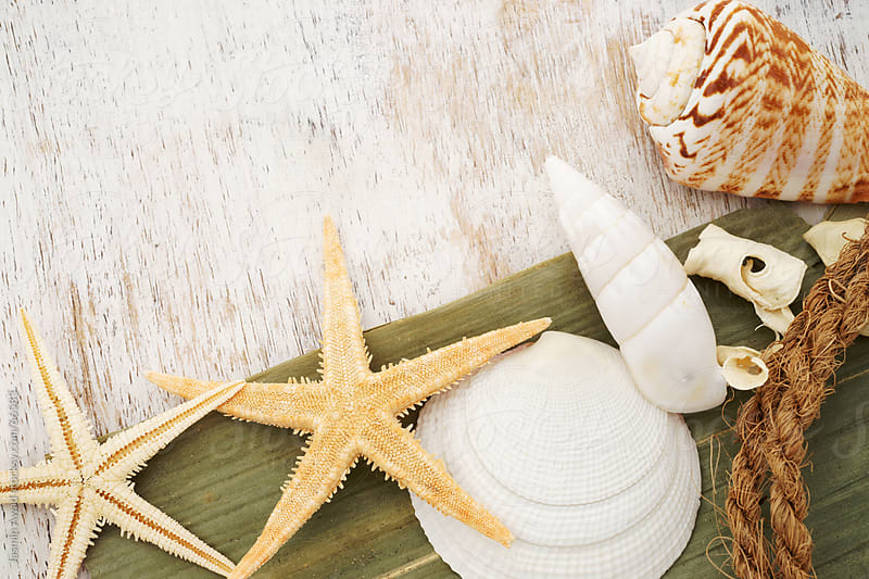 Starfish and Seashells Souvenirs from the beach by Jasmin Awad for Stocksy United