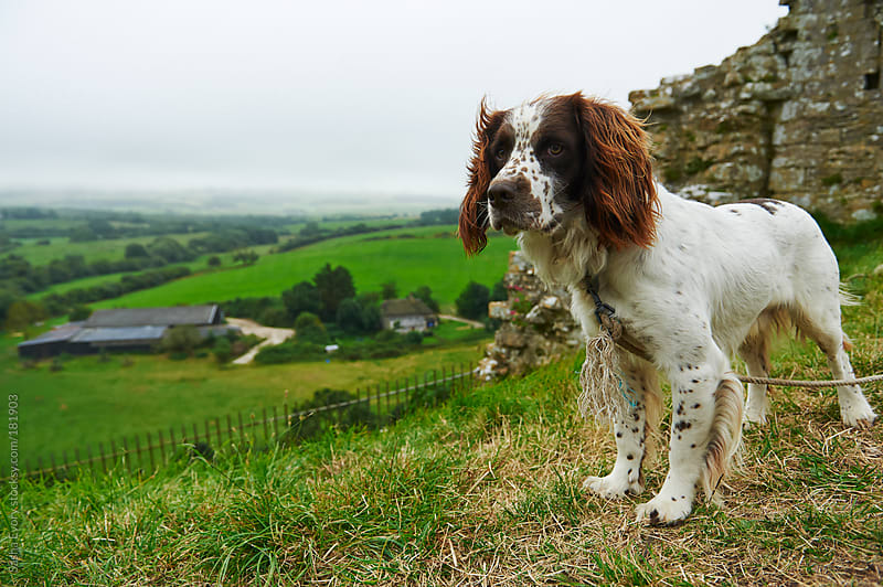 Dog guarding ruins of medieval castle by Sasha Evory for Stocksy United