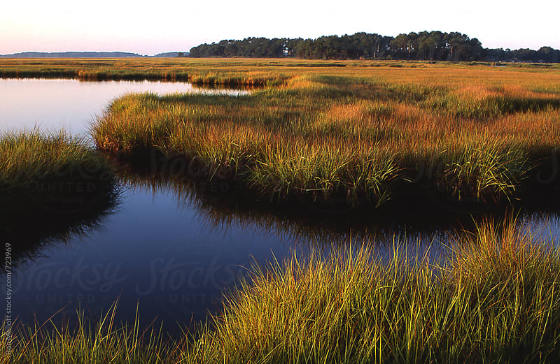morning Ashepoo Basin ACE Basin spartina marsh coastal South Carolina by Ron Mellott for Stocksy United