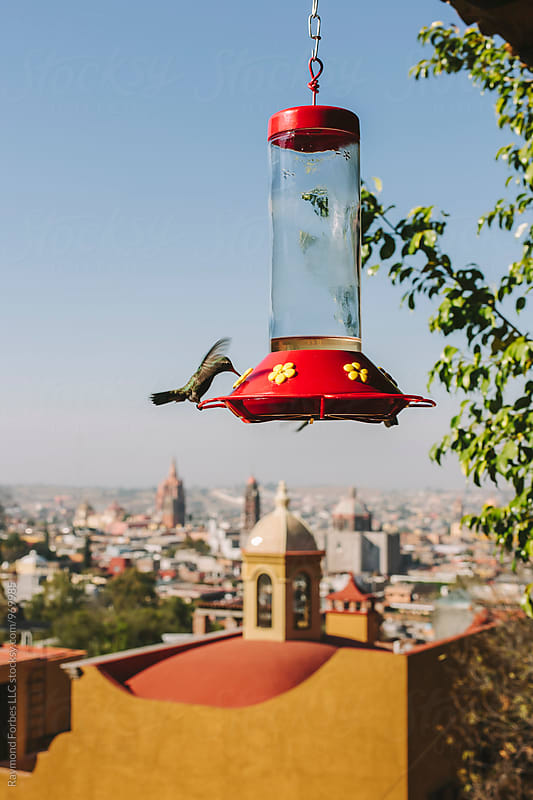 Hummingbird in San Miguel de Allende, Mexico by Raymond Forbes LLC for Stocksy United