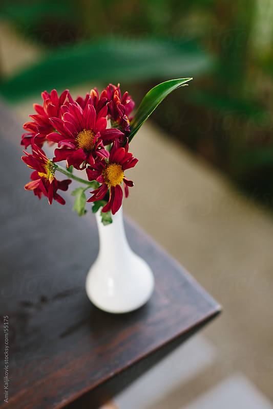 Red flowers in a ceramic vase by Amir Kaljikovic for Stocksy United