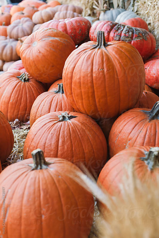 Assorted pumpkins for sale at an outdoor market. by Holly Clark for Stocksy United