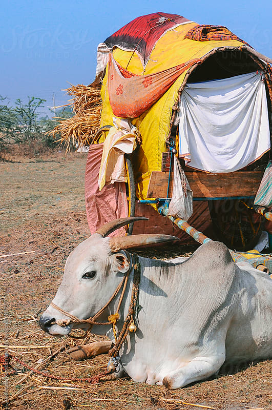 Gypsy Wagon With Cow In India by Alexander Grabchilev for Stocksy United