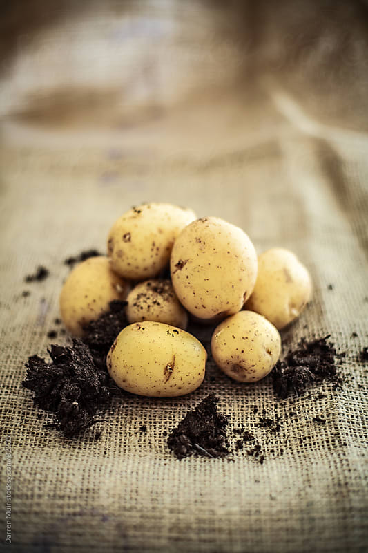 Baby potato's in soil by Darren Muir for Stocksy United