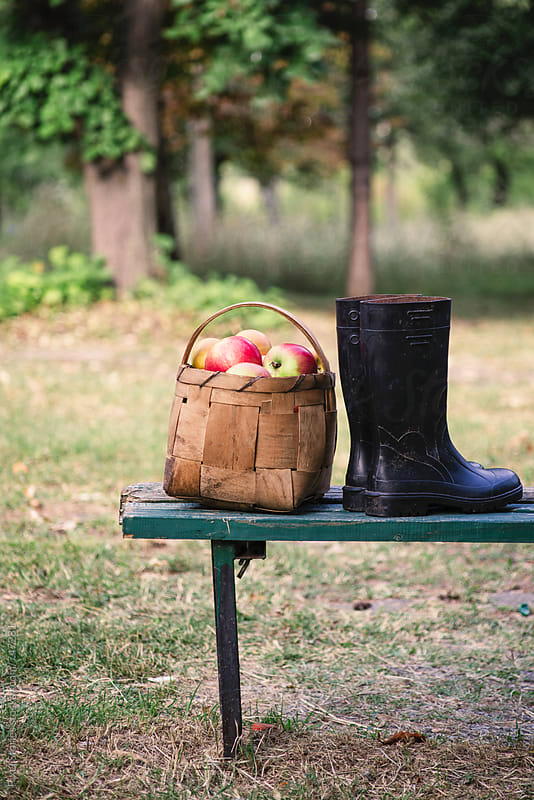 Basket full of apples and boots on a bench by Pixel Stories for Stocksy United