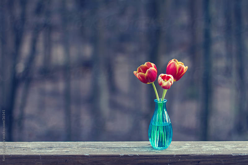 Three colorful tulips in blue vase on wood by Kerry Murphy for Stocksy United