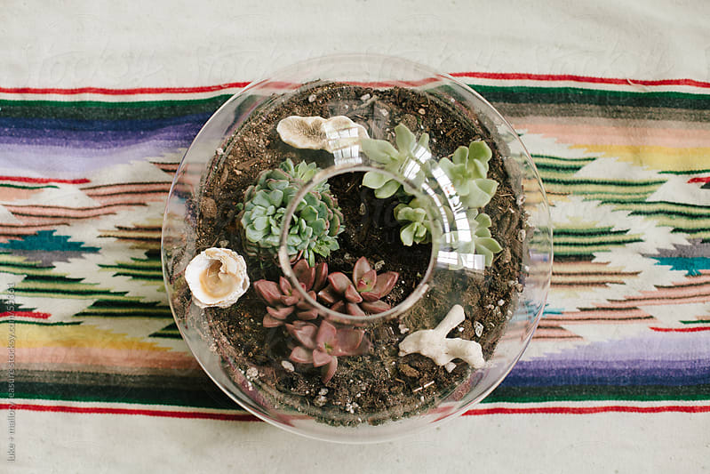 Potted succulents.  by luke + mallory leasure for Stocksy United
