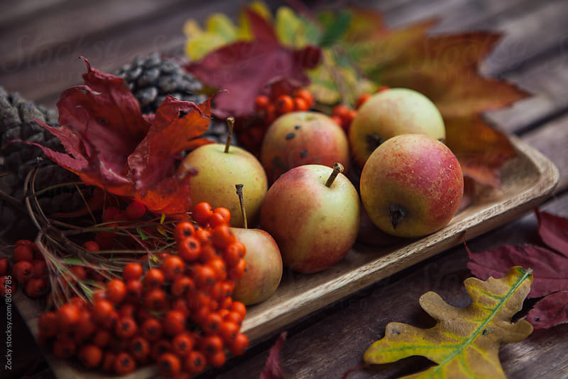 Autumn scene with leaves and apples  by Zocky for Stocksy United