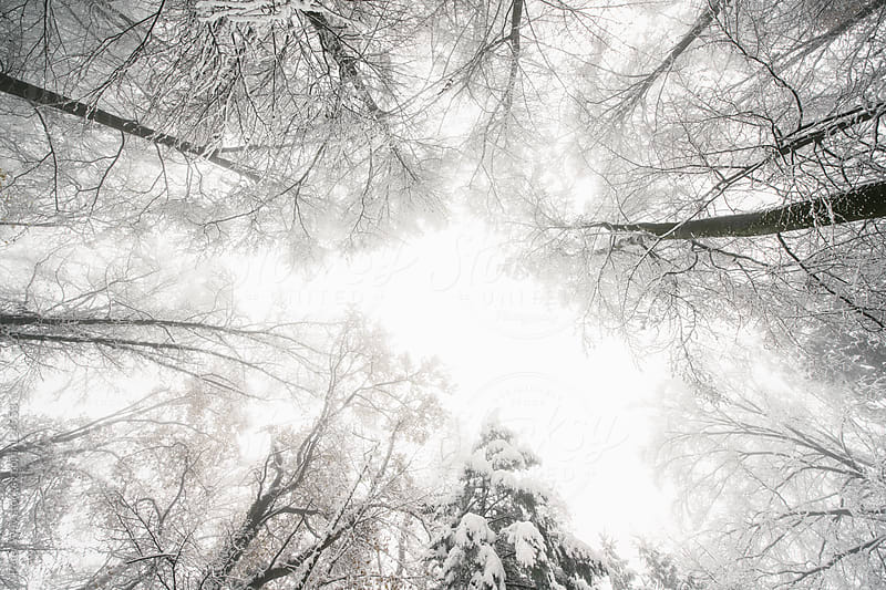 Wide angle view upwards in a snow covered forest by Peter Wey for Stocksy United