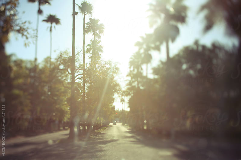 Palm Tree Lined Street  by ALICIA BOCK for Stocksy United