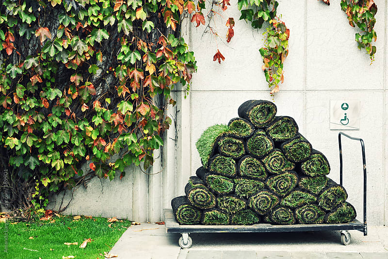 Rolls of sod on a cart by a plant-covered wall by Amanda Large for Stocksy United