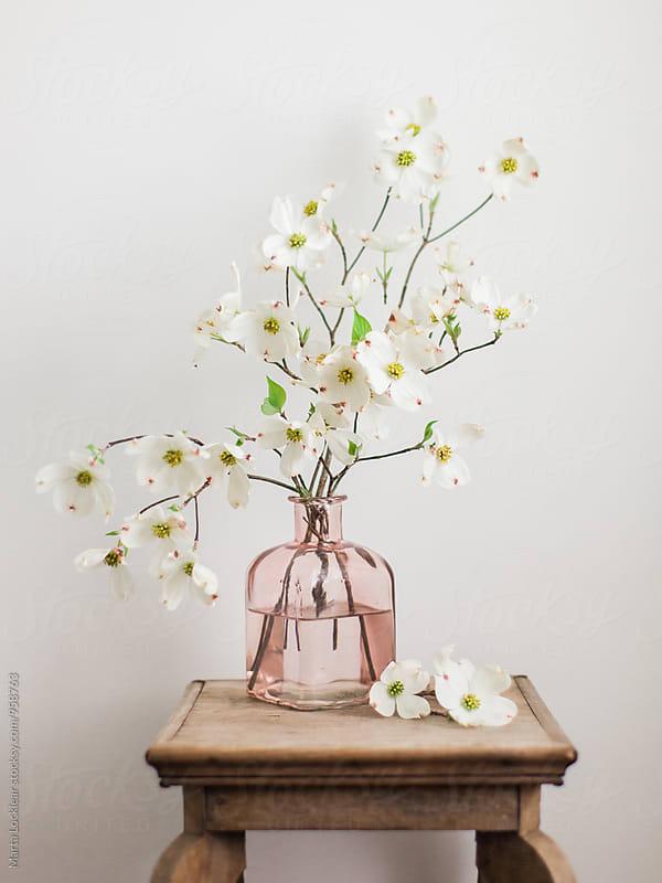 Dogwood Flowers  by Marta Locklear for Stocksy United