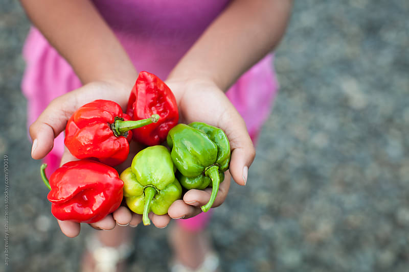 Hands holding a pile of hot red and green peppers by anya brewley schultheiss for Stocksy United