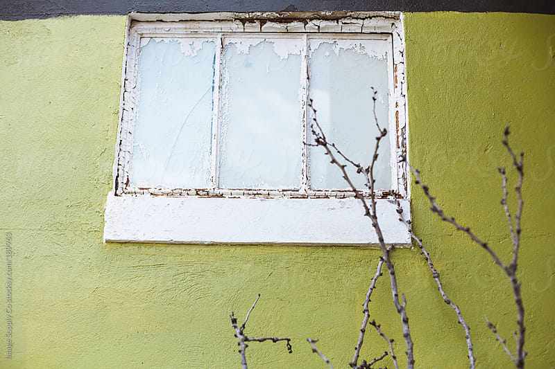 Green wall and window with twigs branching up by Image Supply Co for Stocksy United