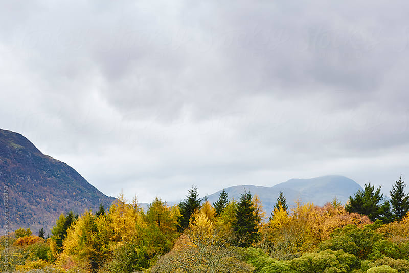 Autumnal tree tops below a cloudy sky. Cumbria, UK. by Liam Grant for Stocksy United