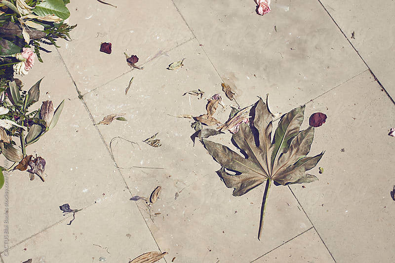 Tree leaf and withered petals on the ground by CACTUS Blai Baules for Stocksy United