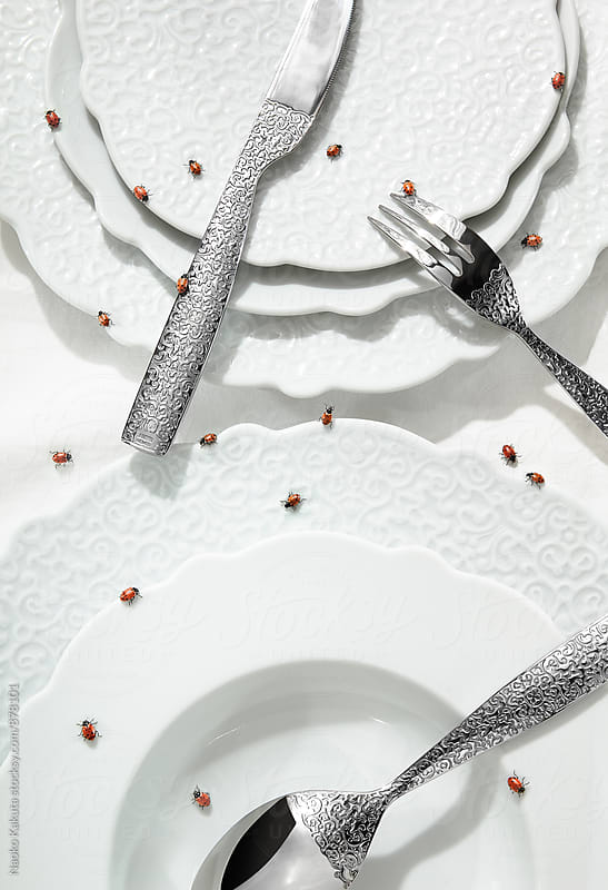 ladybugs on the white tablewares by Naoko Kakuta for Stocksy United