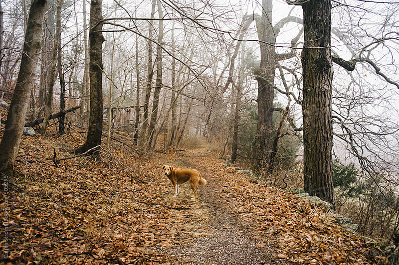 Dog on trail looks back by Caitlin Strom for Stocksy United
