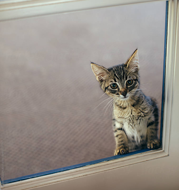 Kitten sequestered from other cats wanting to get out by Carolyn Lagattuta for Stocksy United