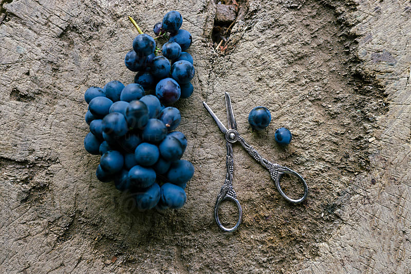 Grape and grape shears on old trunk by Pixel Stories for Stocksy United