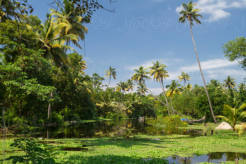 river in the jungle of allepey, south india by Leander Nardin for Stocksy United